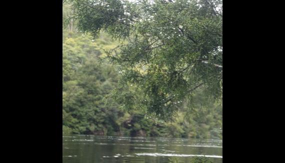 tarkine rafting pieman river corinna